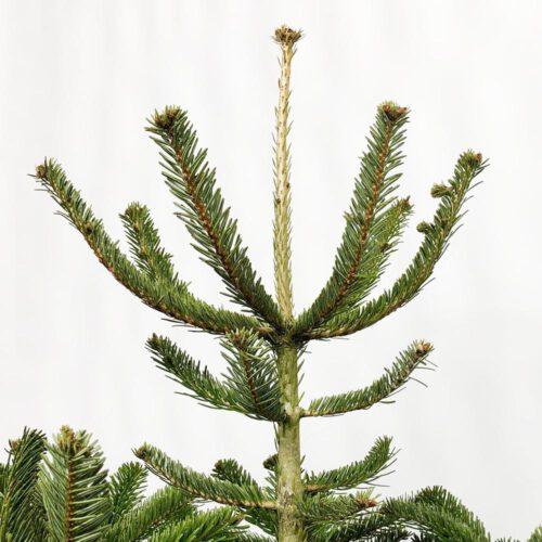 online-kerstboom-bestellen-thuis-leveren